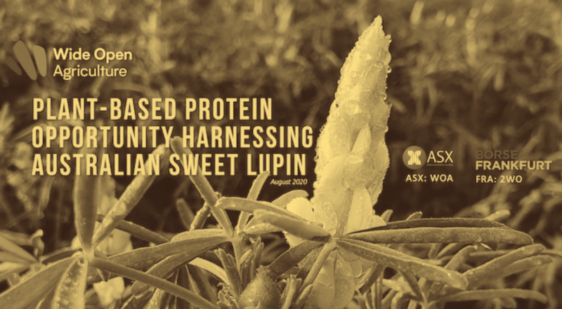WIDE OPEN AGRICULTURE FOOD-GRADE LUPIN PROTEIN PRODUCED AT PILOT-SCALE USING INDUSTRIAL EQUIPMENT